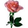 Гарна картинка для аватарки из категории Квіти #681