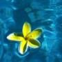 Оригинальная автрака из категории Цветы #684