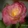 Гарна автрака из категории Квіти #689