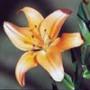 Крутая ава из категории Цветы #690
