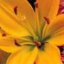 Бесплатная автрака из категории Цветы #692