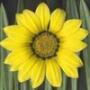 Оригінальна автрака из категории Квіти #694