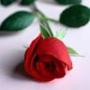 Прикольная ава из категории Цветы #700