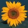 Крутая ава из категории Цветы #701