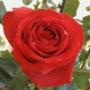 Прикольная ава из категории Цветы #718
