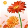 Безкоштовна картинка для аватарки из категории Квіти #726