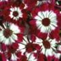 Гарна ава из категории Квіти #729
