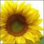 Оригинальная картинка для аватарки из категории Цветы #730