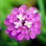 Оригинальная картинка для аватарки из категории Цветы #744