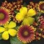 Оригинальная ава из категории Цветы #745