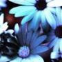 Крутая ава из категории Цветы #752