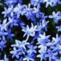 Гарна ава из категории Квіти #755