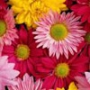 Крутая картинка для аватарки из категории Цветы #760