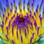 Крута ава из категории Квіти #771