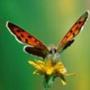 Бесплатная ава из категории Цветы #779