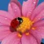 Крута ава из категории Квіти #786