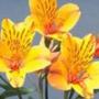 Оригинальная картинка для аватарки из категории Цветы #791