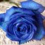 Красивая картинка для аватарки из категории Цветы #803