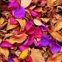 Прикольна автрака из категории Квіти #804