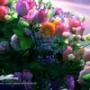 Гарна автрака из категории Квіти #809