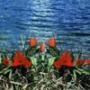 Оригинальная ава из категории Цветы #811