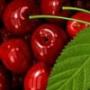 Безкоштовна картинка для аватарки из категории Квіти #813