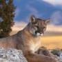 Безкоштовна картинка для аватарки из категории Тварини #1548