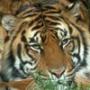 Безкоштовна автрака из категории Тварини #1553