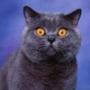 Прикольна картинка для аватарки из категории Тварини #1556