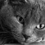Безкоштовна картинка для аватарки из категории Тварини #1570