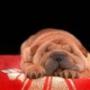 Крута картинка для аватарки из категории Тварини #1572