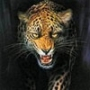 Крута ава из категории Тварини #1578