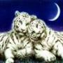 Безкоштовна ава из категории Тварини #1608