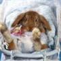 Красивая картинка для аватарки из категории Животные #1610