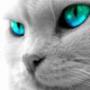 Прикольна картинка для аватарки из категории Тварини #1617