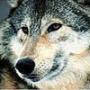 Гарна картинка для аватарки из категории Тварини #1642