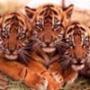 Прикольна картинка для аватарки из категории Тварини #1651