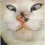 Оригинальная ава из категории Животные #1661