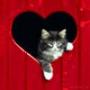 Крута картинка для аватарки из категории Тварини #1663