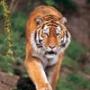 Крута картинка для аватарки из категории Тварини #1666
