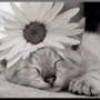 Бесплатная картинка для аватарки из категории Животные #1669