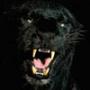 Крута картинка для аватарки из категории Тварини #1671
