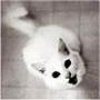 Прикольна ава из категории Тварини #1679