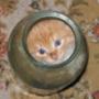 Гарна картинка для аватарки из категории Тварини #1692