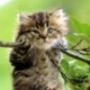 Безкоштовна ава из категории Тварини #1698