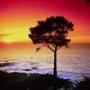 Красивая ава из категории Природа #2872
