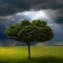Оригинальная картинка для аватарки из категории Природа #3002