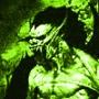 Крутая картинка для аватарки из категории Вампиры #3302