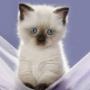 Оригінальна картинка для аватарки из категории Коти та кішки #3428