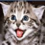 Прикольная ава из категории Коты и кошки #3429
